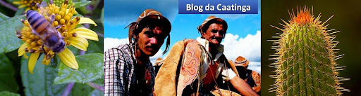 Blog do Comitê da Caatinga