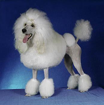 Distintas Razas de Perros (Con Fotos)