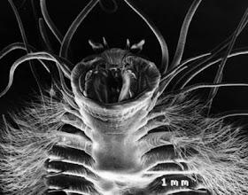 5 Makhluk Bumi Yang Bisa Hidup Di Luar Angkasa [ www.BlogApaAja.com ]