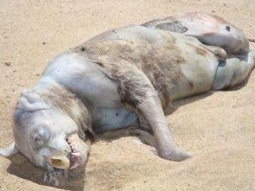 41359272 Makhluk Misteri Terdampar Di Pantai Kanada