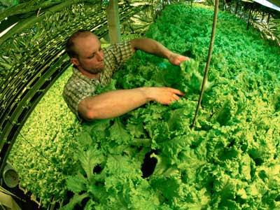 aquaponics 1%5B1%5D Acuaponia: Acuicultura + Hidroponía