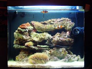 Aquaflash 41 el pez payaso en el acuario for Acuarios para peces marinos