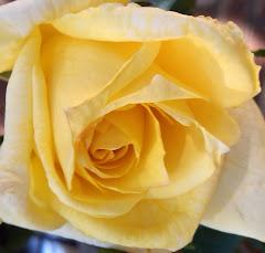 Olidea's Rose