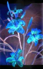 Blue Lilies, Sr Kristine Haugen, ocdh, Hermitage Arts
