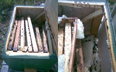 разбитая ловушка для пчёл
