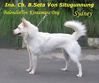 Indonesia Champion B.Seta Von Situgunung a.k.a. Sydney