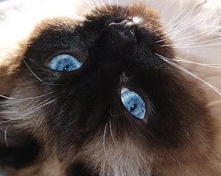 Mata Kucing