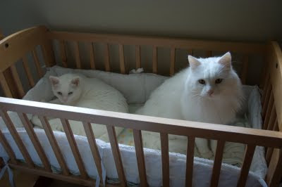 Our Furry Boys: Cats in the Cradle