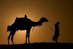 Camello en la sombra