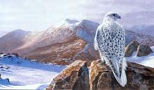 Artic visitor