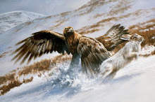 Golden eagle and blue hare