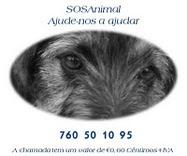 Se ligar 760 50 10 95 está a ajudar a SOSAnimal.