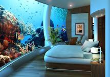 Smileyrose Ramblings Sleeping In Fish Tank.love