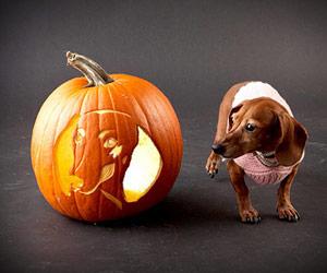 Dog Breed Jack O Lanterns Dog Carved Pumpkins