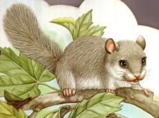 Ciao bambini e 39 autunno gli animali vanno in letargo for Immagini di animali che vanno in letargo