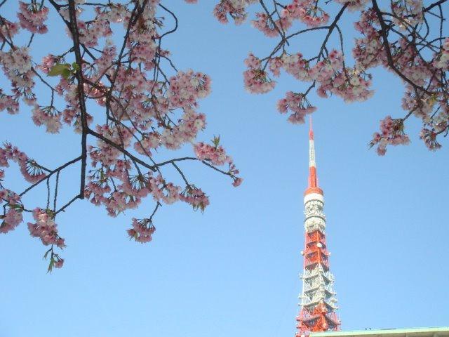 SAKURA x TOKYO TOWER