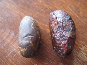 cacao beans, before and after shelling