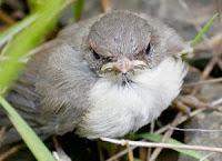 Grumpy baby bird.