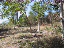 Gravesite prep 3