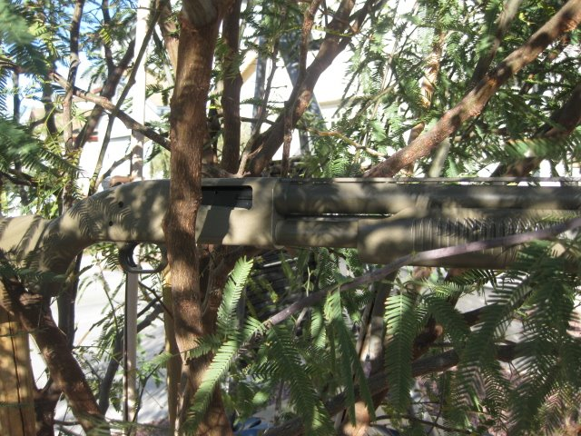 Shotgun econo camo in tree