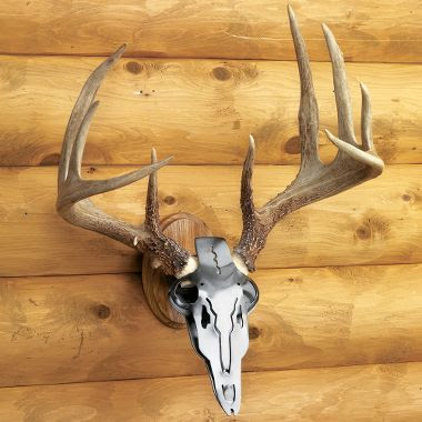 http://www.wttaxidermy.com/european-skull-antler-mounts-custom ... Mule Deer European Mount