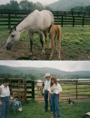 My cousin's quarter-horse farm