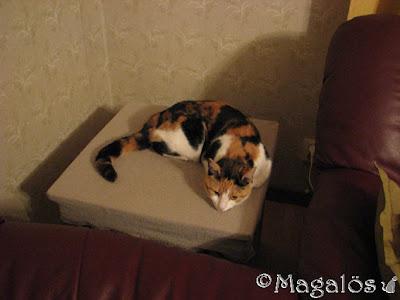 Kattfröken ligger mitt på bordet i hörnet mellan sofforna.