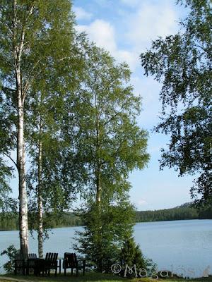 Vy över sjö med gröna björkar i förgrunden.