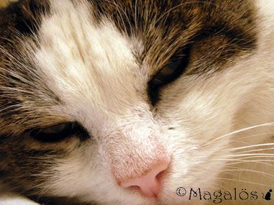 Närbild på kattherrens ansikte
