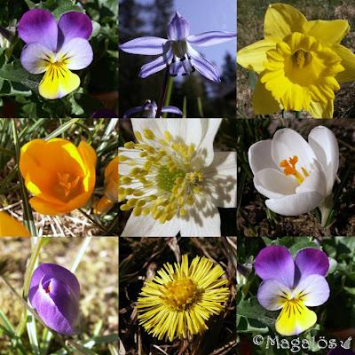 Collage av vårblommor.
