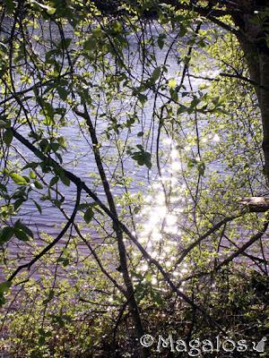 Glittrande vatten bakom en spirande trädgren.