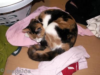 Kattfröken bland tvätten.