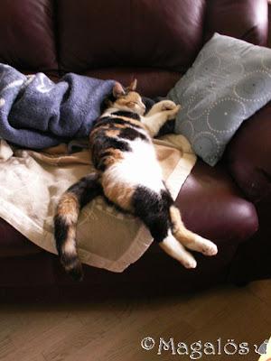 Sovande katt i soffan