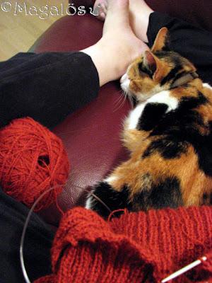 En kattfröken i mitt knä och min tröj-stickning.
