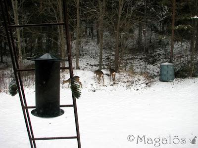 Tre rådjur i skogsbrynet.