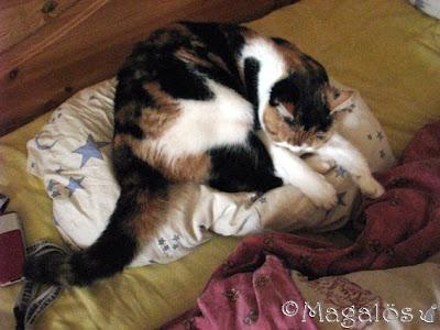 Kattfröken sover på min kudde.