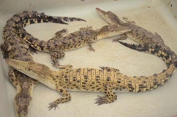 crocodile farm and nature park