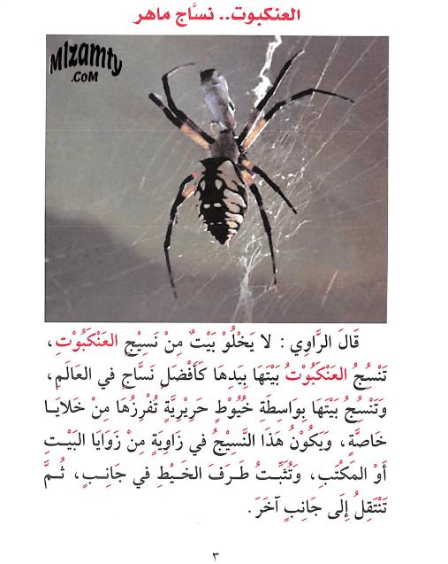 قصة العنكبوت نساج ماهر للاطفال - قصص الحيوانات