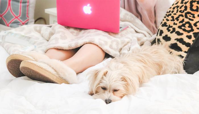 morkie sleeping on bed