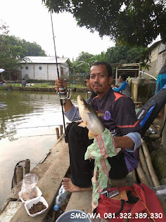 Master Umpan Ikan Patin Harian