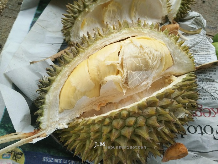 Kuantan jejak durian sampai ke dusun.