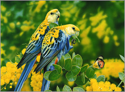 best coularful parrot hd photos