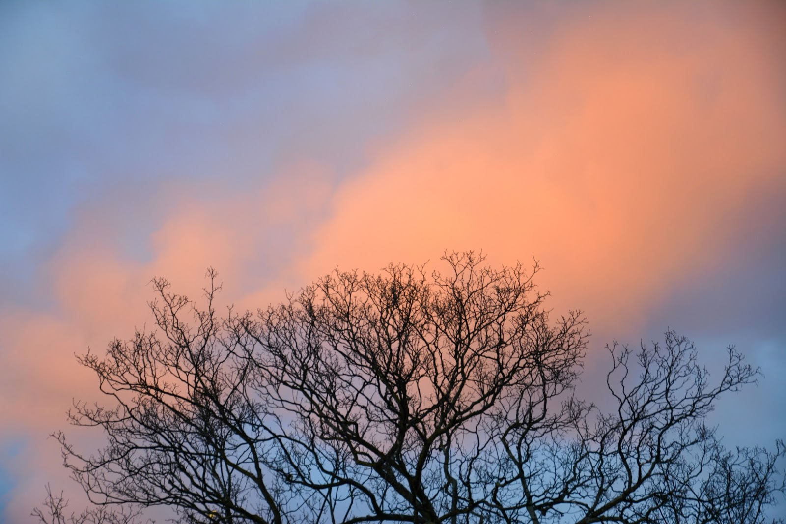 Tree branches in front of pink cloud on blue sky