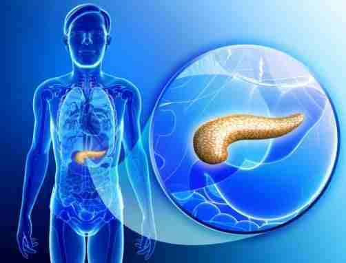 Apa Itu Pankreas Fungsi Letak Dan Penyakit Yang Berkaitan Dengan Pankreas Portal Sains