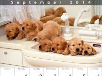 Crear un Calendario en Línea