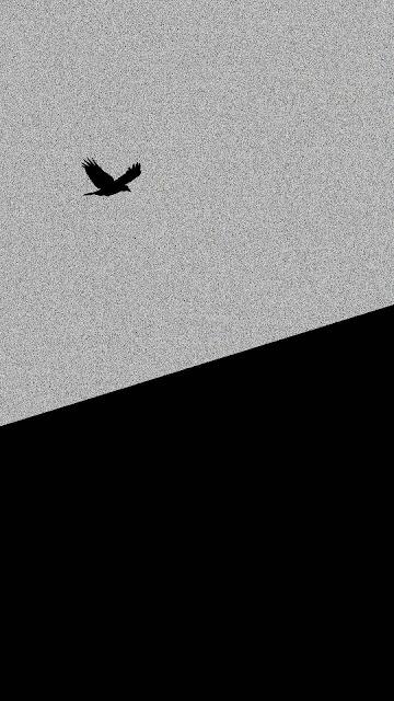 black bird,black,bird,black bulls,black clover,big black bird,who is bird black clover,aimer black bird,nero black clover,black clover nero,who is nero black clover,xblitz black bird,who is the bird black clover,blackbird,black bird fpv,the black bird,black bird trap,sr 71 black bird,black bird flies,xblitz black bird test,black bird on fire,black bird review,easy black bird trap