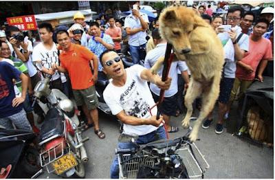 Miris, 10.000 Anjing disiksa dan Jadi Hidangan Festival di Cina