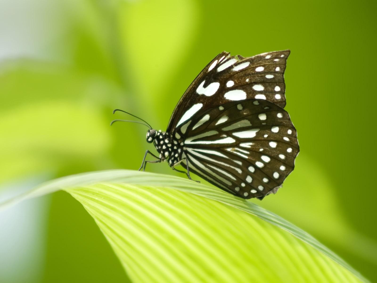 Shahid Wallpaper Hd Butterfly Wallpapers Desktop Wallpapers