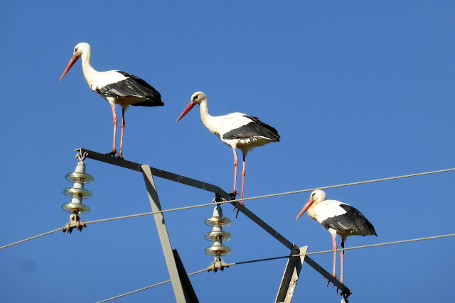 Cigüeñas Bulgaria