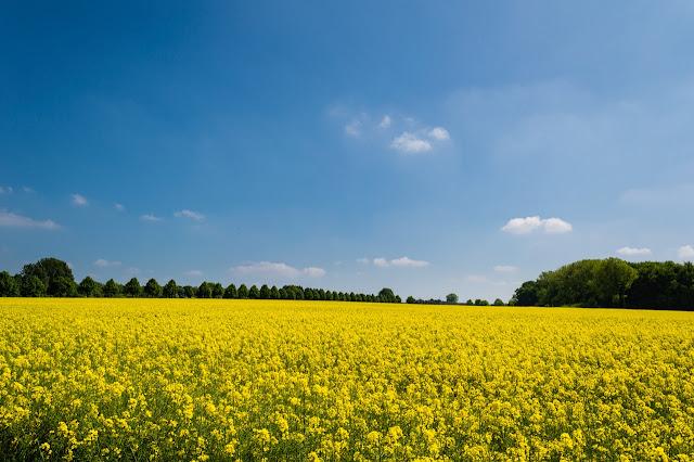 विषाणु जनित फसलों के रोग हैं | There are diseases of viral crops